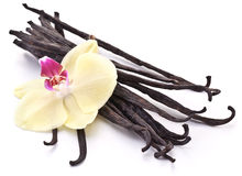 Vanilla sticks with a flower. Royalty Free Stock Images