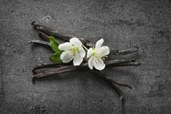 Vanilla sticks and flowers. On grey background Stock Images