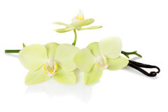 Vanilla pods and  flowers orchids Royalty Free Stock Photos