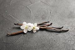 Vanilla sticks and flowers. On grey background Royalty Free Stock Photo
