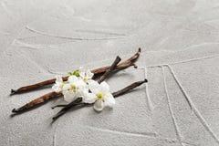 Vanilla sticks and flowers Royalty Free Stock Photos