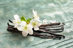 Vanilla sticks and flowers. On wooden background royalty free stock images
