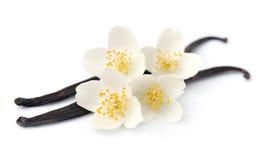 Vanilla sticks with jasmin Royalty Free Stock Images