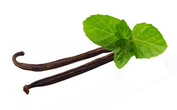 Vanilla sticks and leaf of mint. Isolated Stock Photo