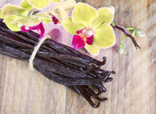 Vanilla sticks and orchid flower Stock Photography