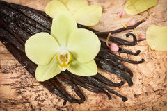 Vanilla sticks and orchid flower Royalty Free Stock Images