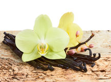 Vanilla sticks and orchids Royalty Free Stock Photography