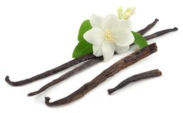 Vanilla sticks with white flower isolated on white background Stock Photography