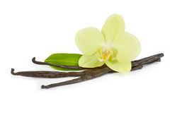 Vanilla sticks and yellow orchid with green leaf Royalty Free Stock Image