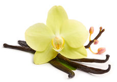 Vanilla sticks and yellow orchids Royalty Free Stock Images