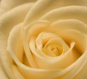 Vanilla Swirls Stock Image