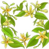 Vanilla vector frame. Vanilla branches vector frame on white background Royalty Free Stock Photo