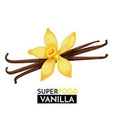 Vanilla vector icon. Royalty Free Stock Photo