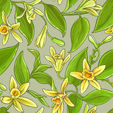 Vanilla vector pattern Royalty Free Stock Photography