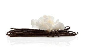 Vanilla with white flower Stock Photography