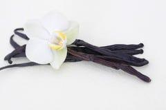 Vanille avec la fleur photo stock