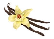 Vanille-Bohne und Blume (Ausschnittspfad) Lizenzfreies Stockfoto