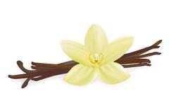 Vanille-Hülsen und Blume Stockfotografie