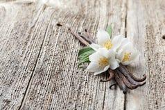 Vanille met jasmijn Royalty-vrije Stock Afbeelding