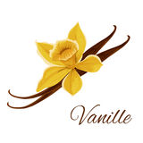 Vanille pod with flower isolated icon Stock Photo