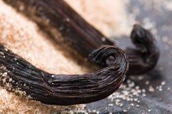 Vanillebohnen mit aromatischem Zucker Lizenzfreies Stockbild