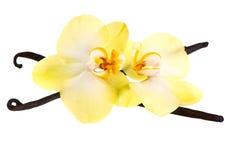 Vanillehülsen und Orchideeblume stockfotos