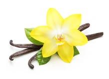 Vanillehülsen und Orchideenblume lokalisiert lizenzfreies stockbild