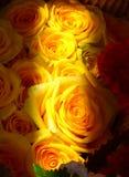 Vanillepudding-gelbe Rosen Stockfoto