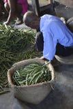 Vanilleselectie uit Madagascar Royalty-vrije Stock Foto