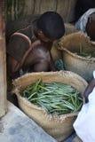 Vanilleselectie uit Madagascar Stock Afbeeldingen