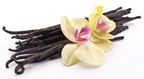 Vanillestöcke mit einer Blume. lizenzfreies stockfoto