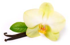 Vanillesteuerknüppel mit Blume Stockfoto