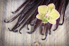 Vanillestokken en orchidee stock illustratie