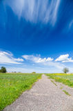 Vanishing footpath at blossom field under blue sky Royalty Free Stock Photography