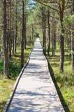 Vanishing hiking trail through pine wood Stock Photo