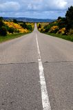 Vanishing Point. Road to White Ness with yellow blooming Gorse royalty free stock photo