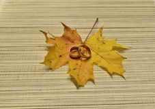 Vanishing. Wedding rings on a maple leaf Stock Images