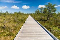 Vanishing wooden footpath through bog area Stock Photos