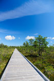 Vanishing wooden footpath through bog area Royalty Free Stock Image