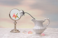 Vanity. Concept of vanity with faded rose and fresh rose reflection Royalty Free Stock Photos