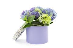 Vanlig hortensia i ask Royaltyfri Bild