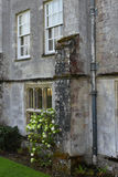 Vanlig hortensia och gamla Abbey Window, Mottisfont abbotskloster, Hampshire, England Arkivbild