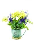 Vanlig hortensia och lavendel i den isolerade krukan Royaltyfria Foton