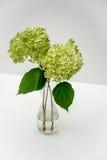 Vanlig hortensiablomma i en vas Royaltyfria Foton