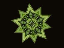 Vanlig hortensiagrönska Royaltyfria Foton