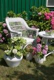 Vanlig hortensiaträdgård Royaltyfri Fotografi