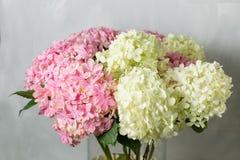Vanliga hortensior i en glass vas Vanliga hortensior producerar större golvmopphuvud som igenom utgöras av klungor av små blommor Arkivbild