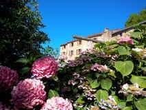 Vanliga hortensior och historisk lantgård Royaltyfri Fotografi