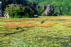 VANLONG自然储备, NINHBINH,越南- 2014年10月26日-在一条竹小船的未认出的人渔 免版税库存图片