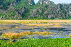 VANLONG自然储备, NINHBINH,越南- 2014年10月26日-在一条竹小船的未认出的人渔 图库摄影